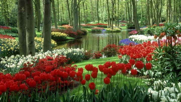 sad_keukenhof_gardens_sad_keykenhof_niderlandy_1920x1080